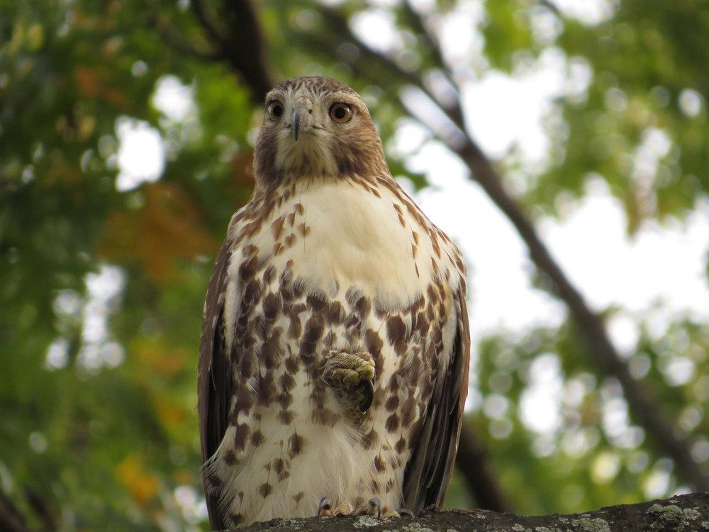 Hawk 1500 10-26-2016 057P.jpg