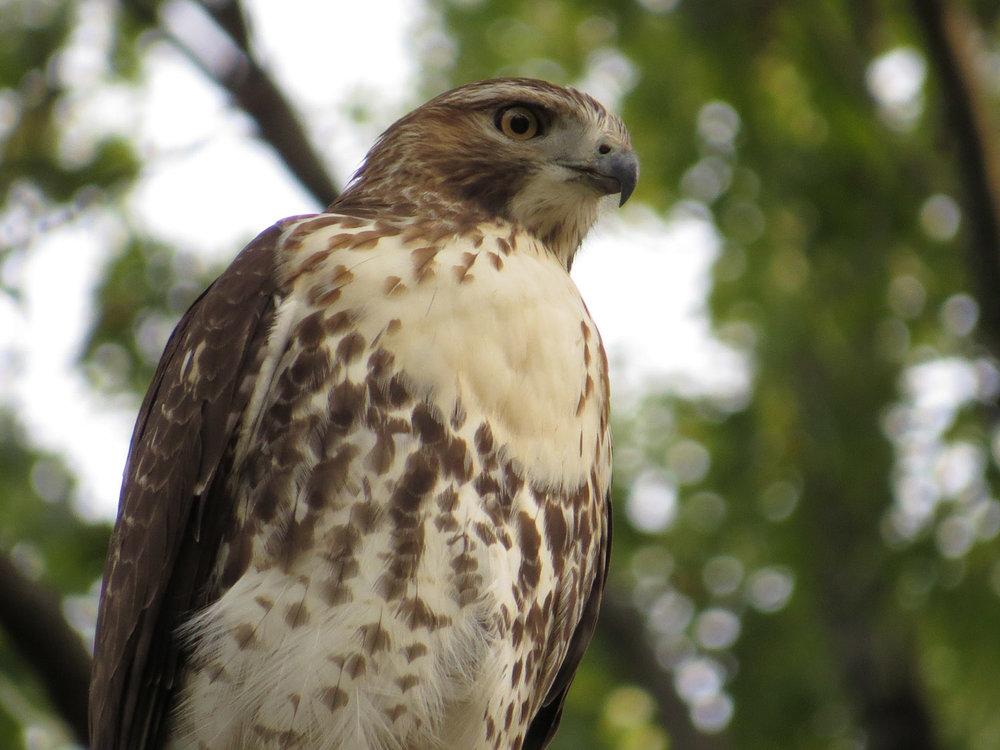 Hawk 1500 10-26-2016 062P.jpg