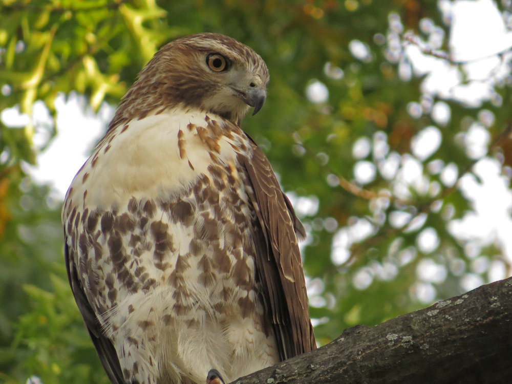 Hawk 1500 10-26-2016 091P.jpg