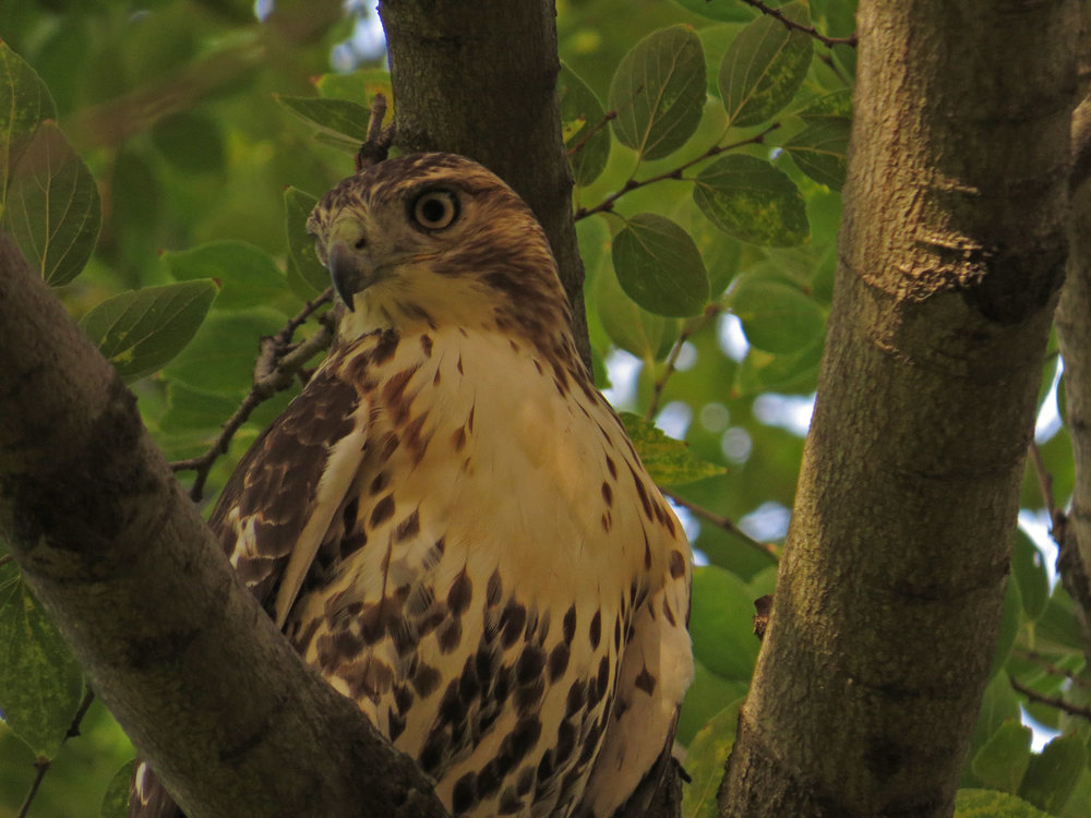 Hawk 1500 11-2-2016 064P.jpg