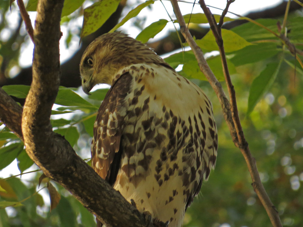 Hawk 1500 11-2-2016 076P.jpg
