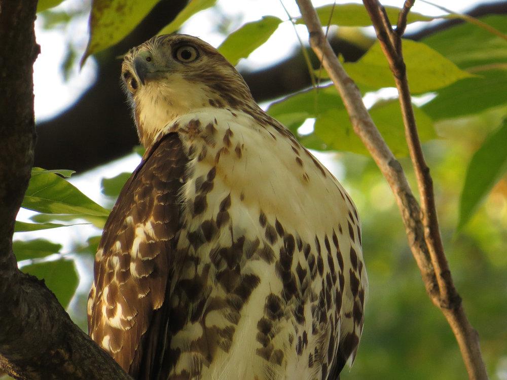Hawk 1500 11-2-2016 084P.jpg