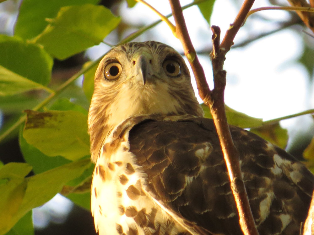 Hawk 1500 11-2-2016 118P.jpg