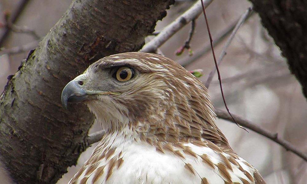 Hawk 1500 3-1-2017 282A.jpg