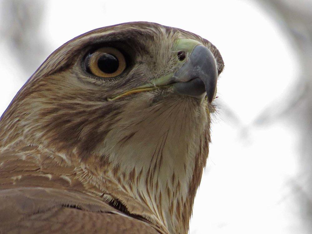 Hawk 1500 3-1-2017 063P.jpg
