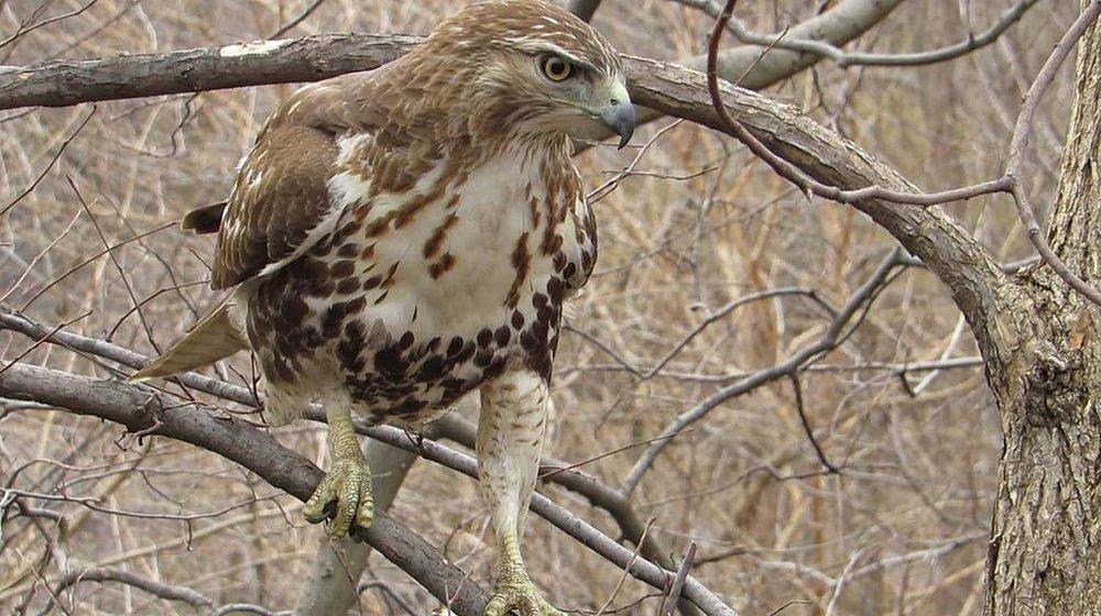 Hawk 1500 3-1-2017 104AP.jpg