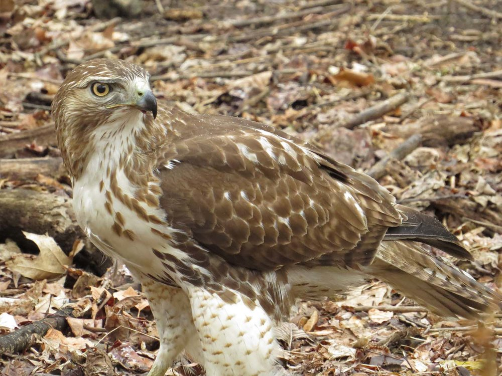 Hawk 1500 3-1-2017 181P.jpg
