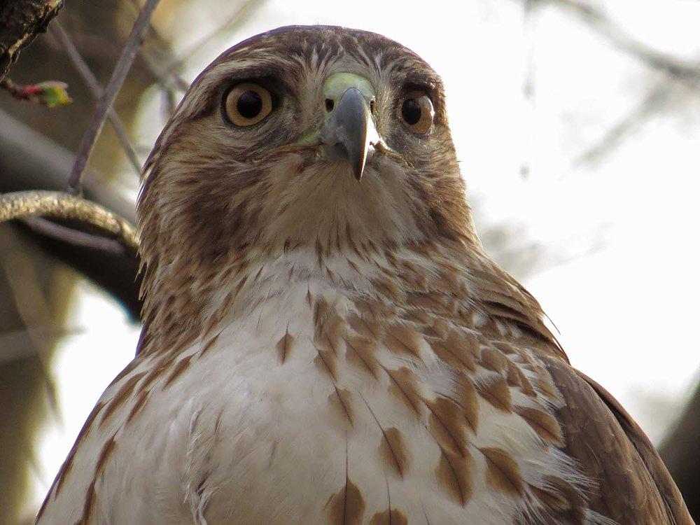 Hawk 1500 3-1-2017 305P.jpg