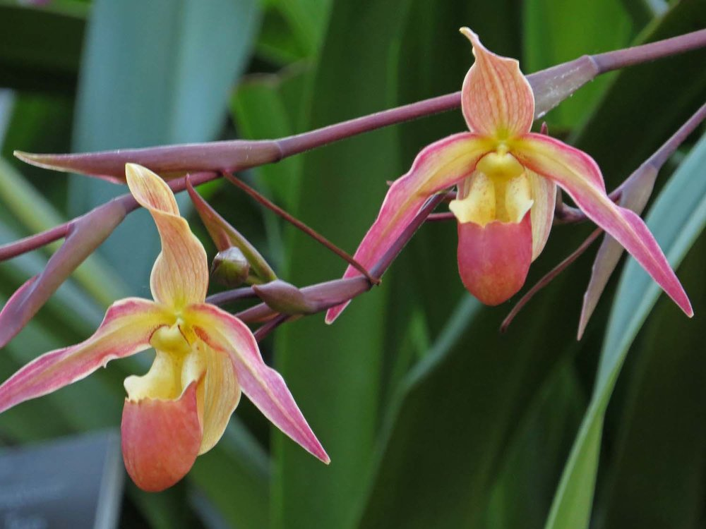 Orchid 1500 3-12-2017 401P.jpg
