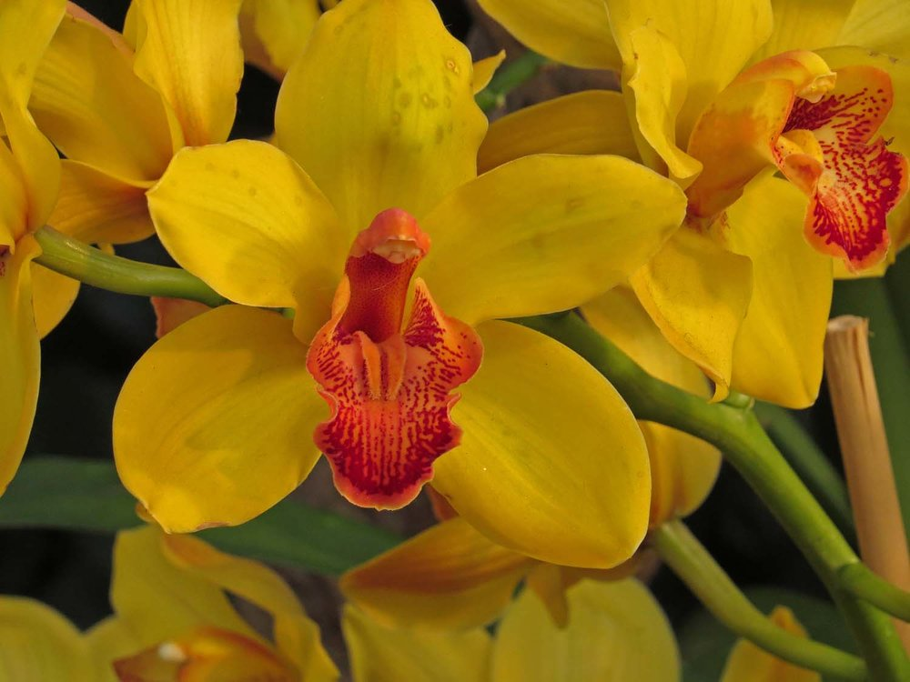 Orchid 1500 3-12-2017 410P.jpg