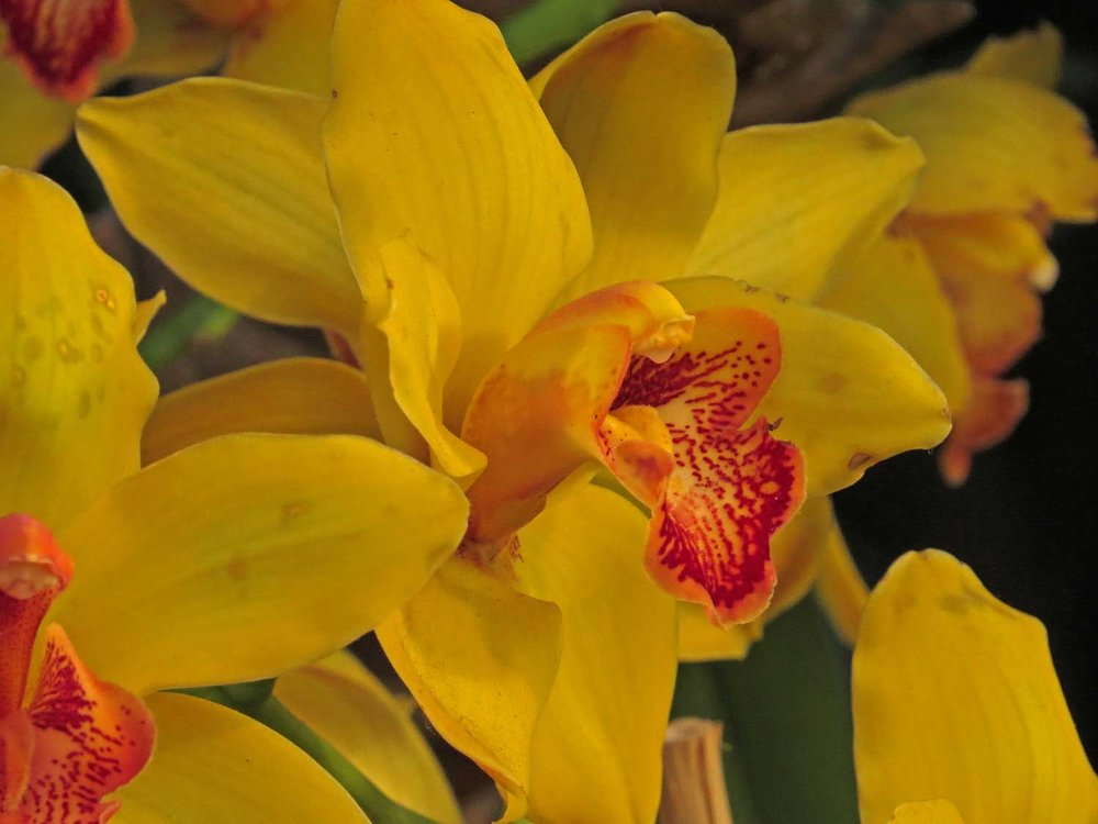 Orchid 1500 3-12-2017 415P.jpg