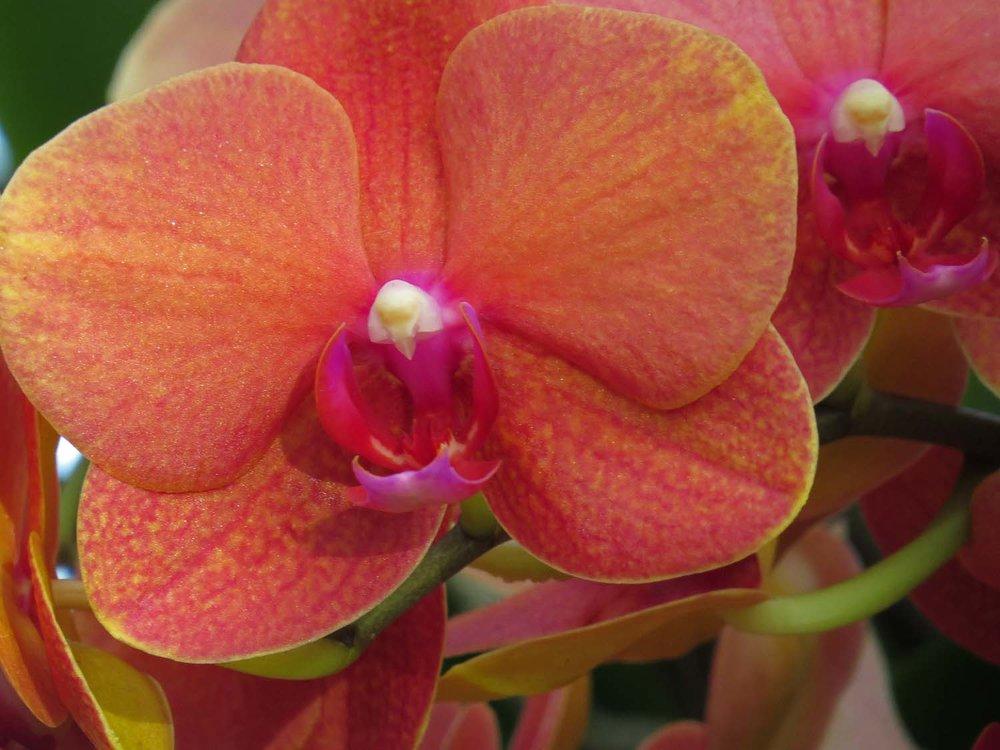 Orchid 1500 3-29-2017 174P.jpg