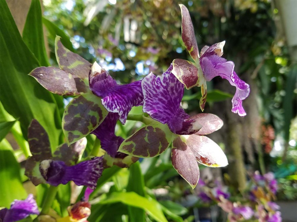 Orchid 1500 20170312_165057P.jpg