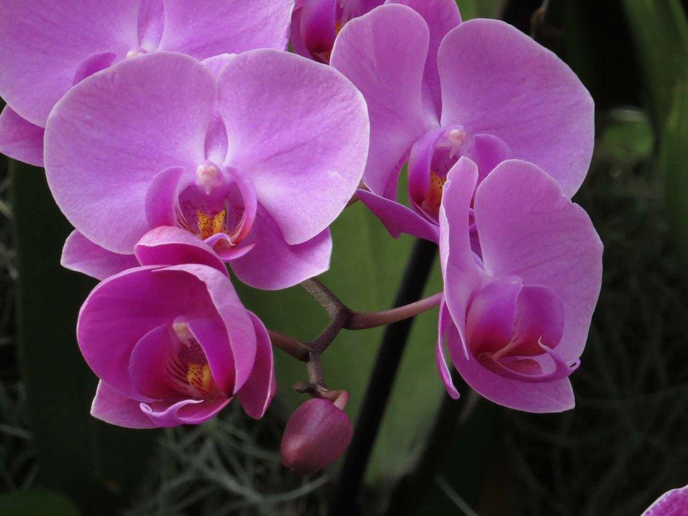 Orchid 1500 3-12-2017 072P.jpg