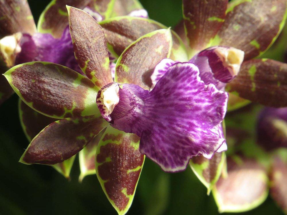Orchid 1500 3-12-2017 100P.jpg