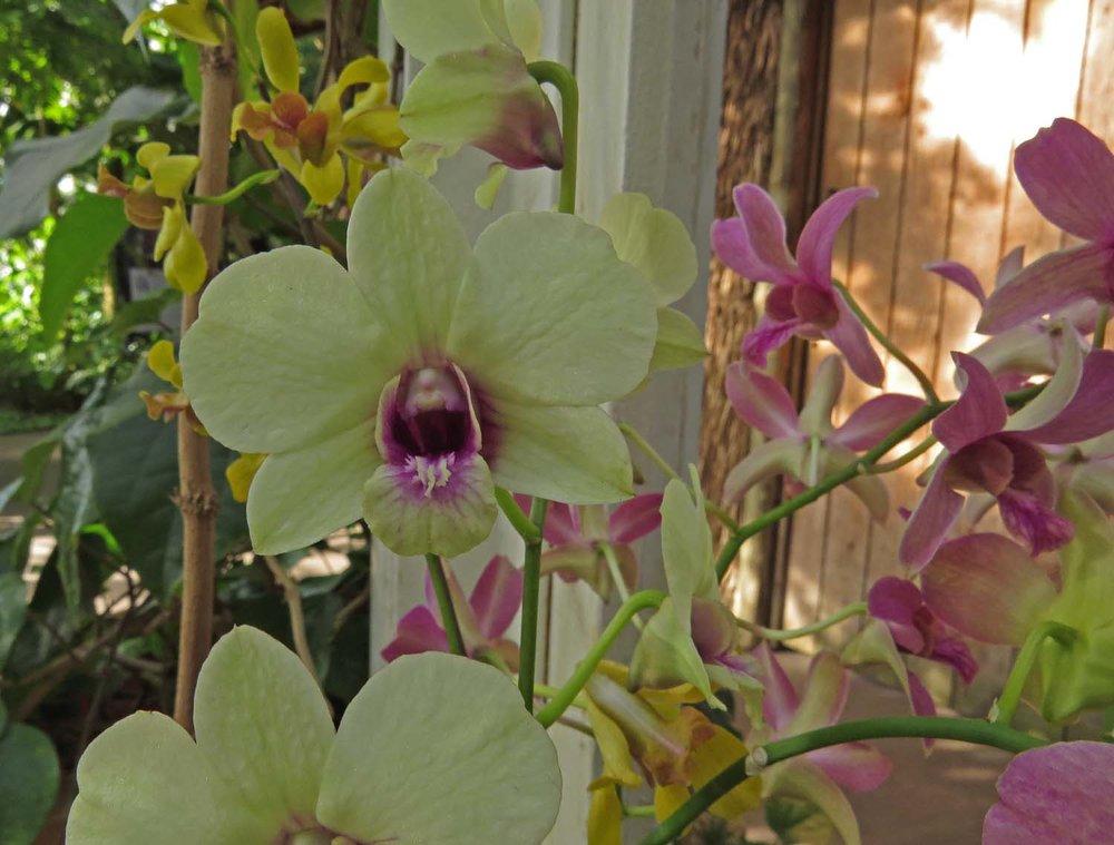 Orchid 1500 3-12-2017 137P.jpg