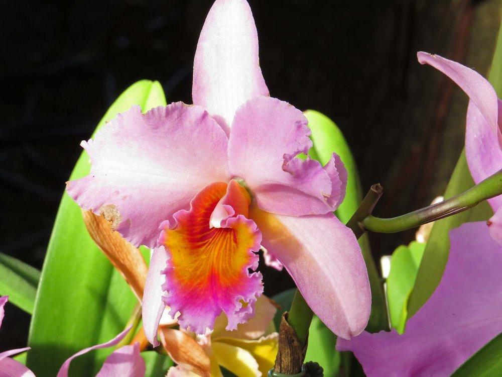 Orchid 1500 3-12-2017 144P.jpg