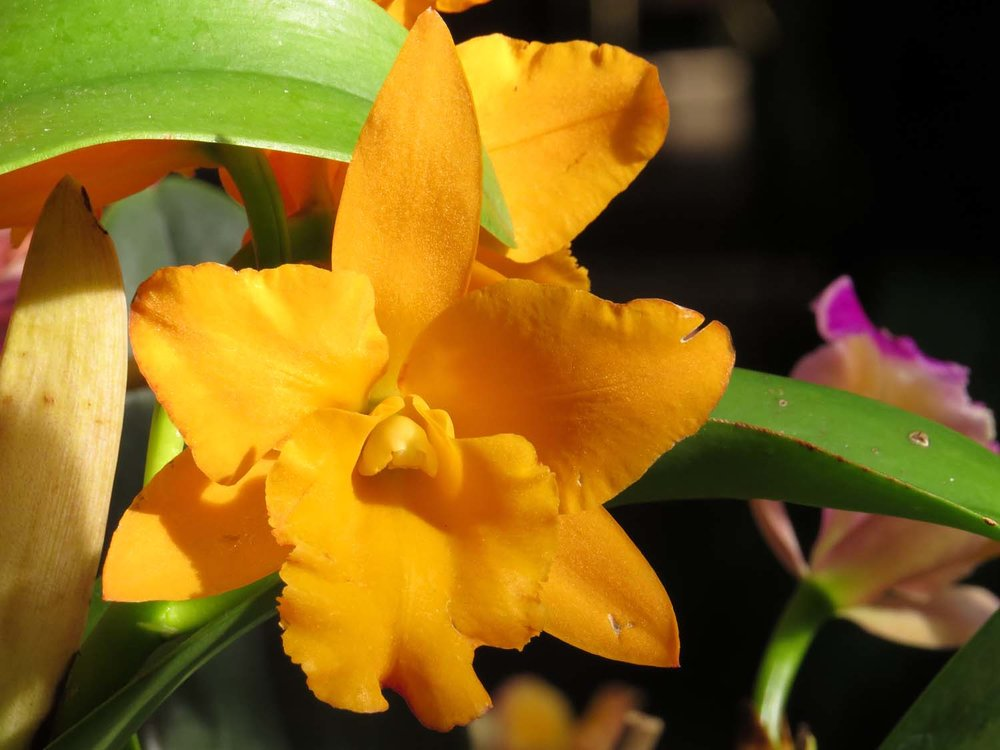 Orchid 1500 3-12-2017 154P.jpg