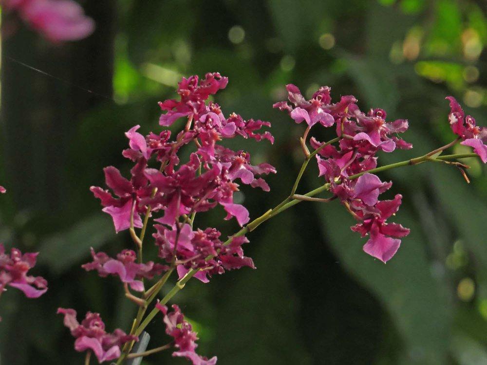 Orchid 1500 3-12-2017 179P.jpg