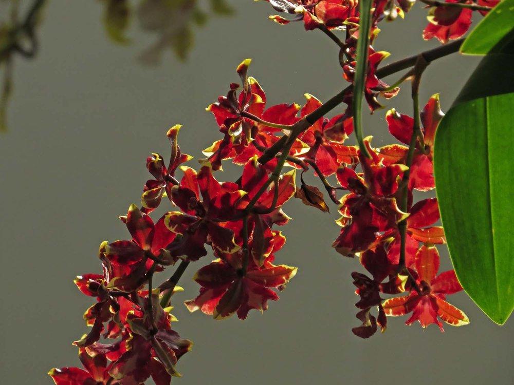 Orchid 1500 3-12-2017 186P.jpg