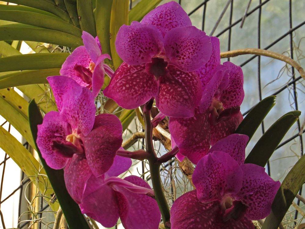 Orchid 1500 3-12-2017 211P.jpg