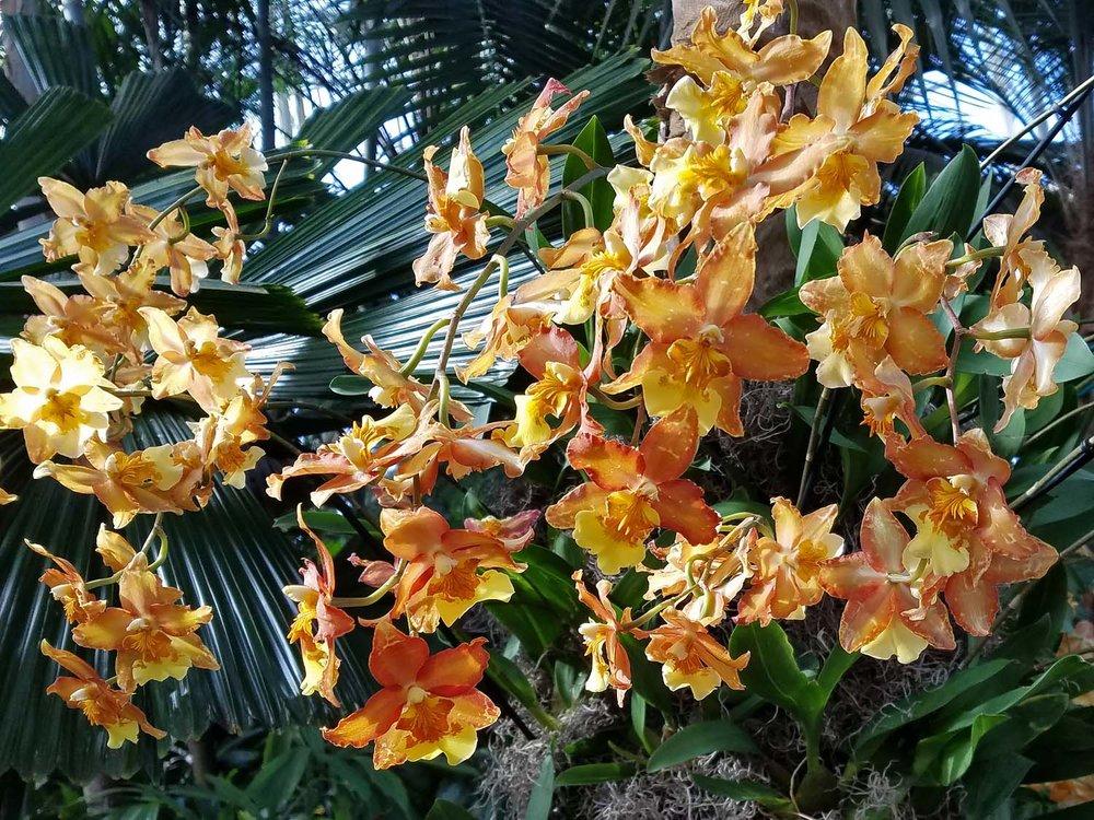 Orchid 1500 20170312_160421PP.jpg
