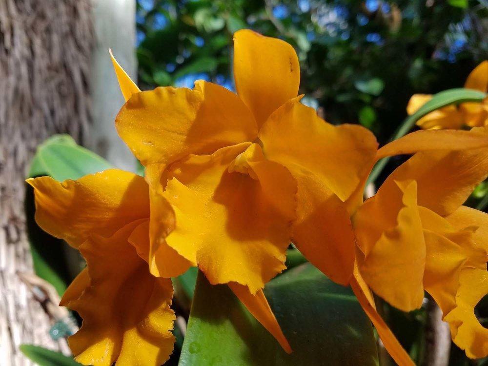 Orchid 1500 20170312_164355P.jpg