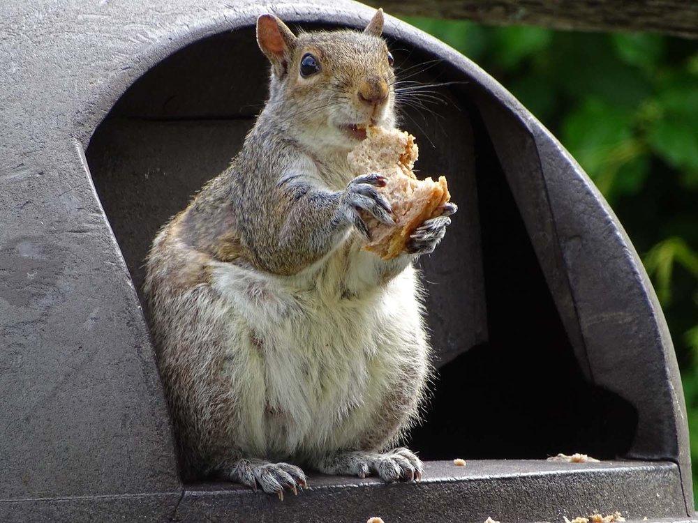 Squirrel 1500 5-24-2017 Jam Bay 126P.jpg