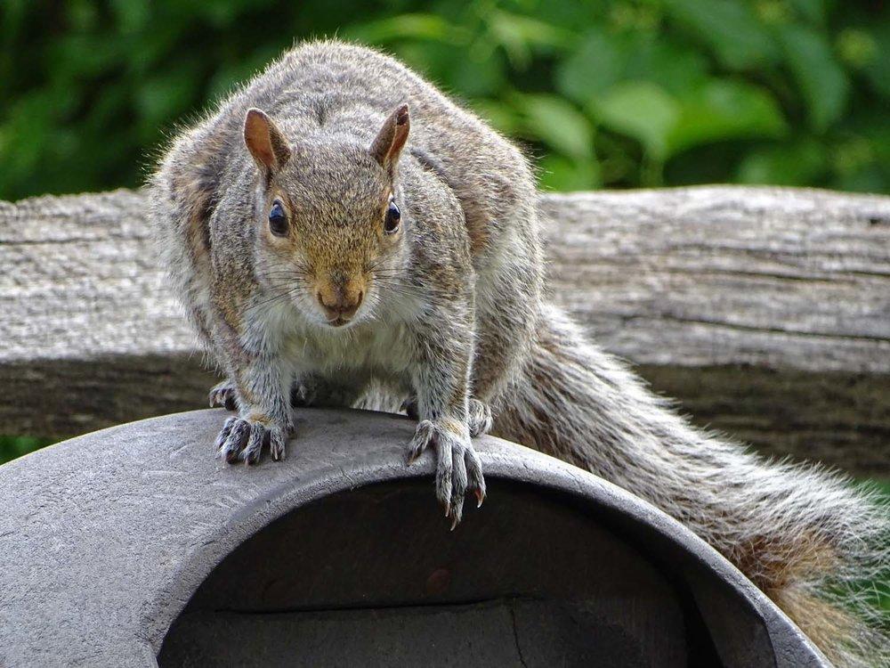 Squirrel 1500 5-24-2017 Jam Bay 124P.jpg