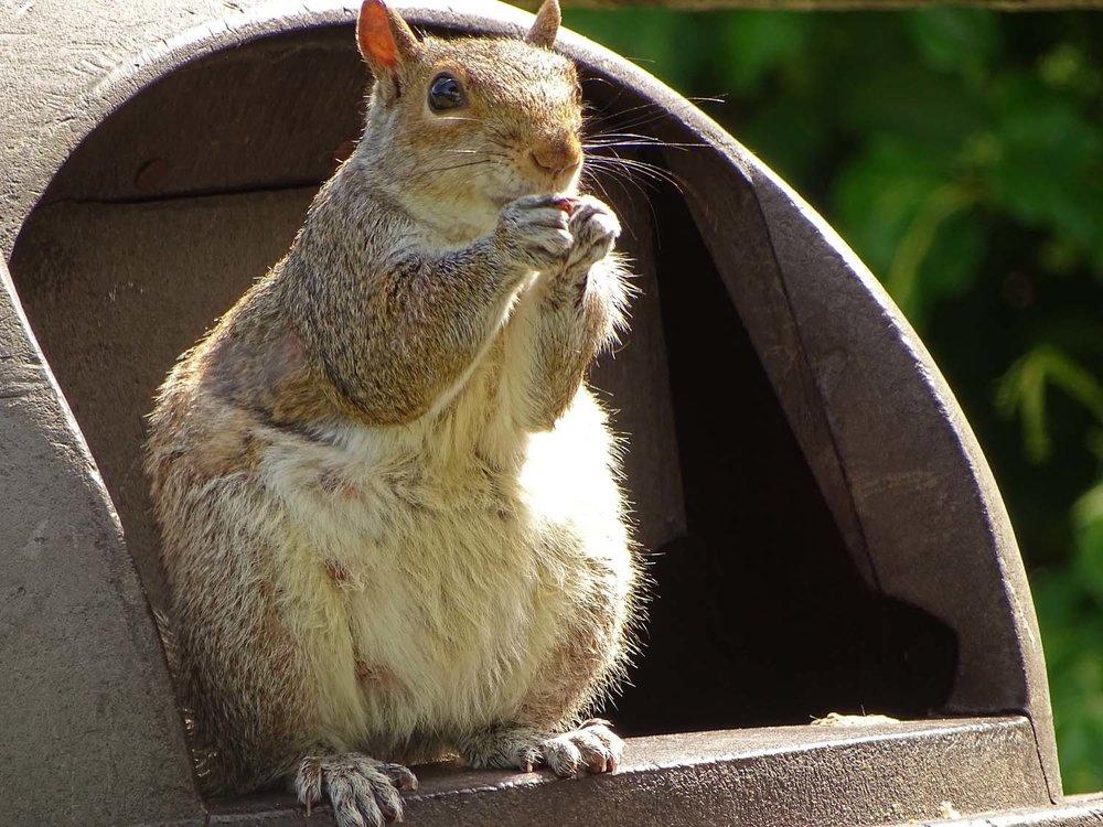 Squirrel 1500 5-24-2017 Jam Bay 136P.jpg