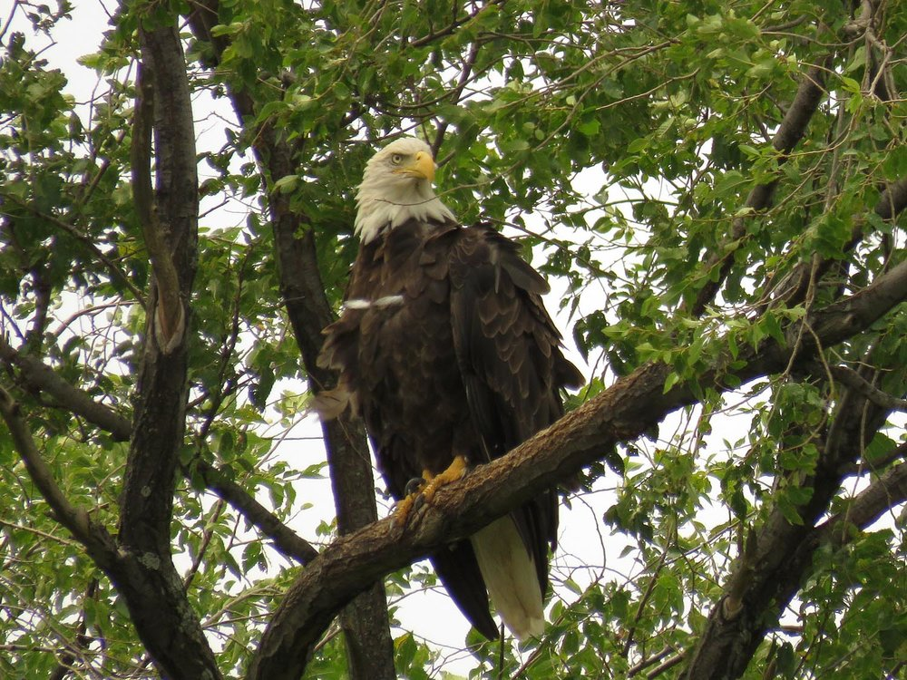 Eagles 1500 8-11-2017 134P.jpg