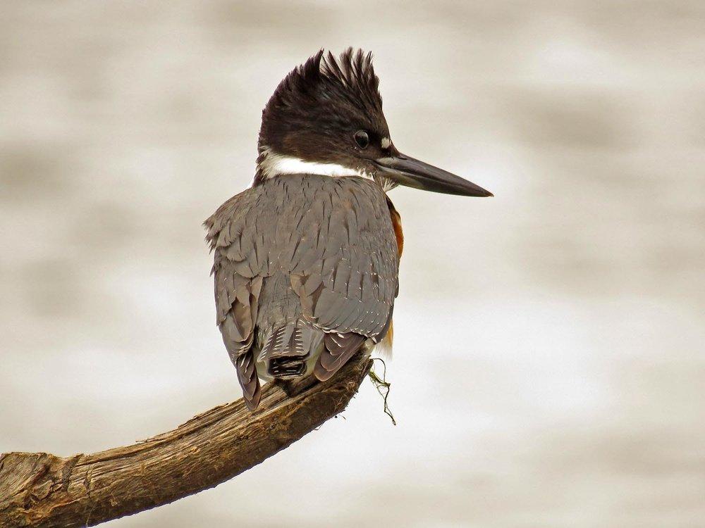 Kingfisher 1500 9-30-2017 076P.jpg