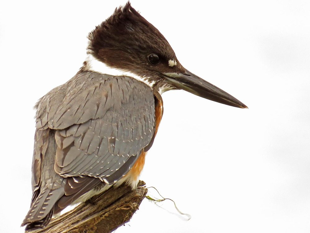 Kingfisher 1500 9-30-2017 086P.jpg