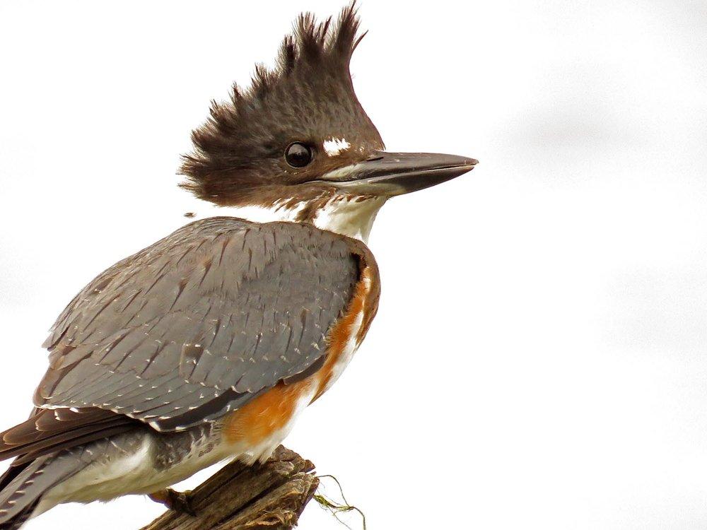 Kingfisher 1500 9-30-2017 087P.jpg