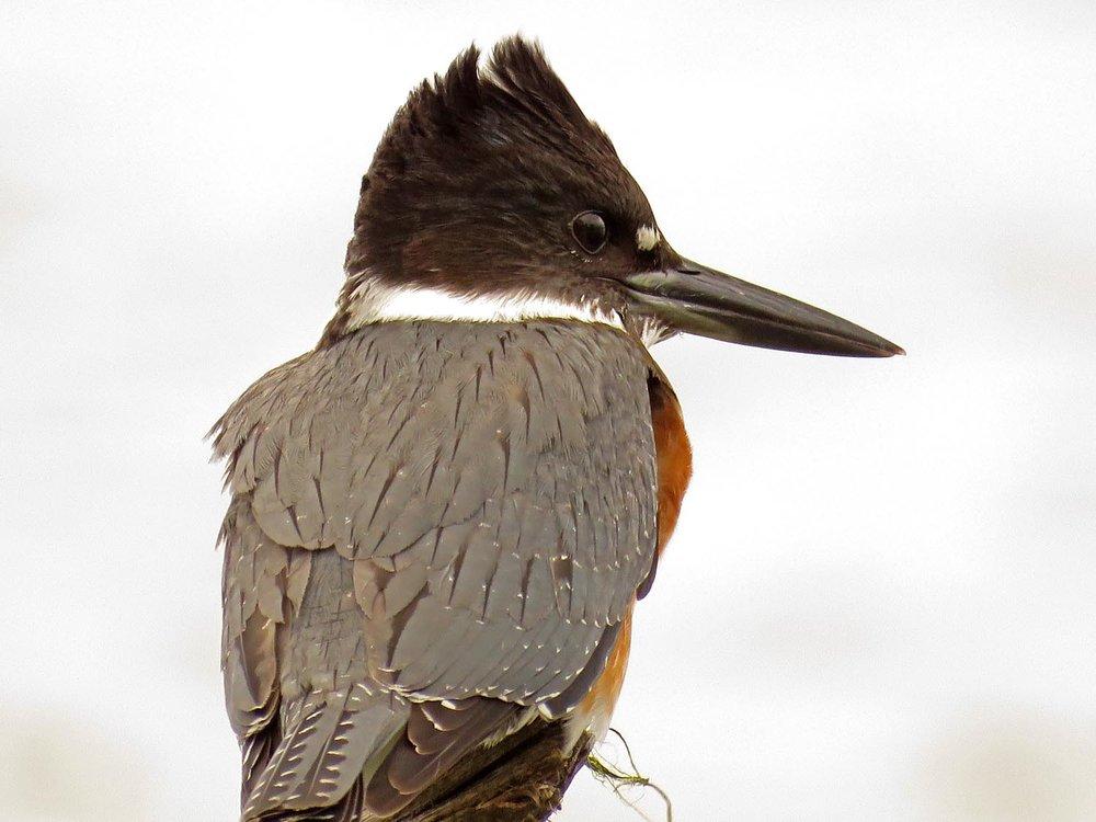 Kingfisher 1500 9-30-2017 083P.jpg