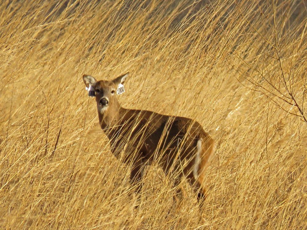 Deer 1500 1-26-2018 SI 017P.jpg