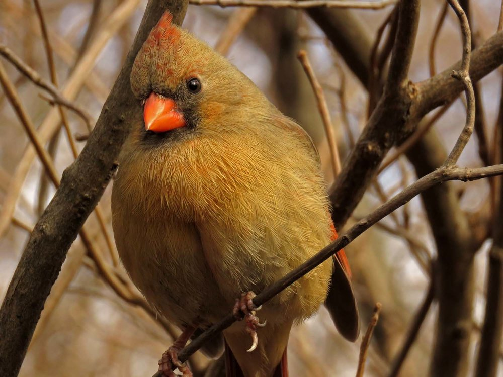 Cardinal 1500 3-13-2018 023P.jpg