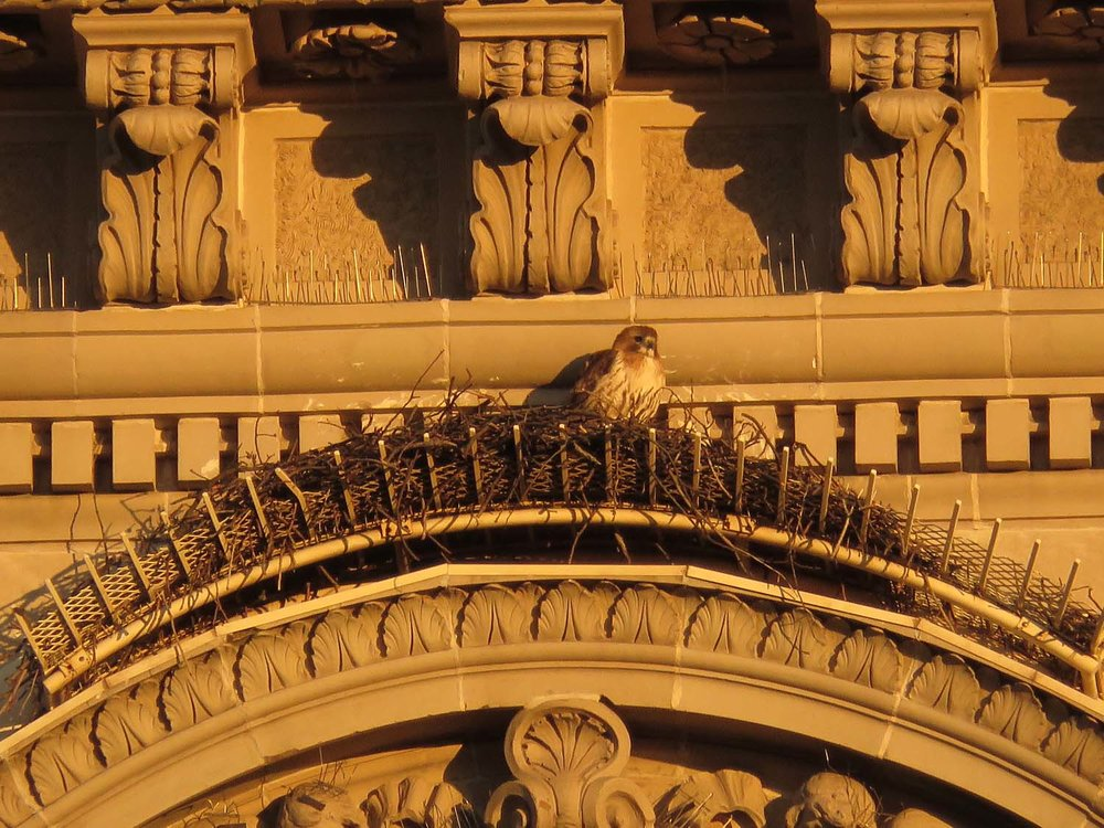 Octavia on the nest