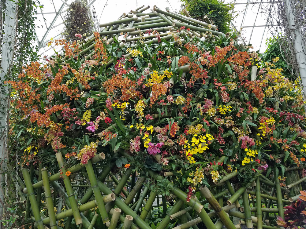 New York Botanical Garden Orchid Show, April 17, 2018