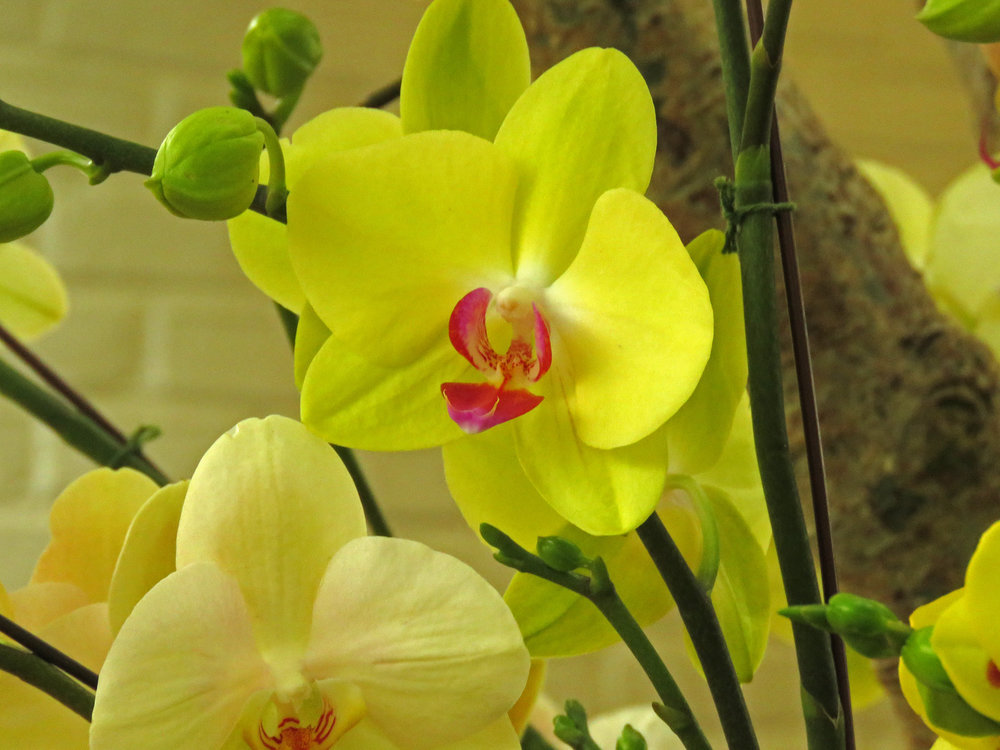 Orchid 1500 4-17-2018 NYBG 201P.jpg