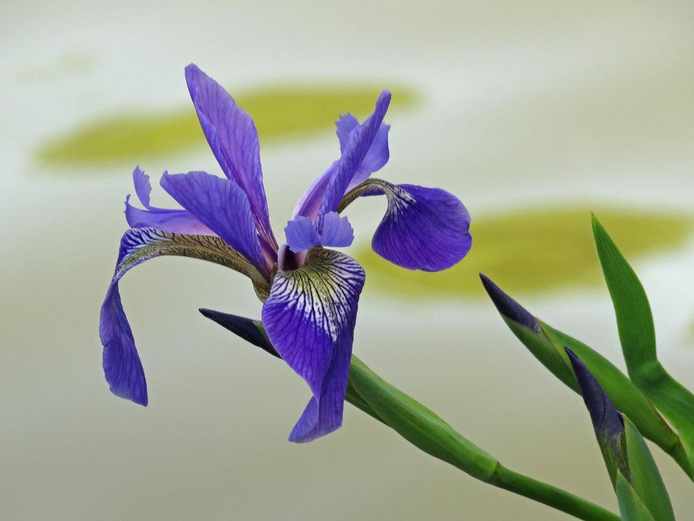 Flowers 1500 5-21-2018 050P.jpg