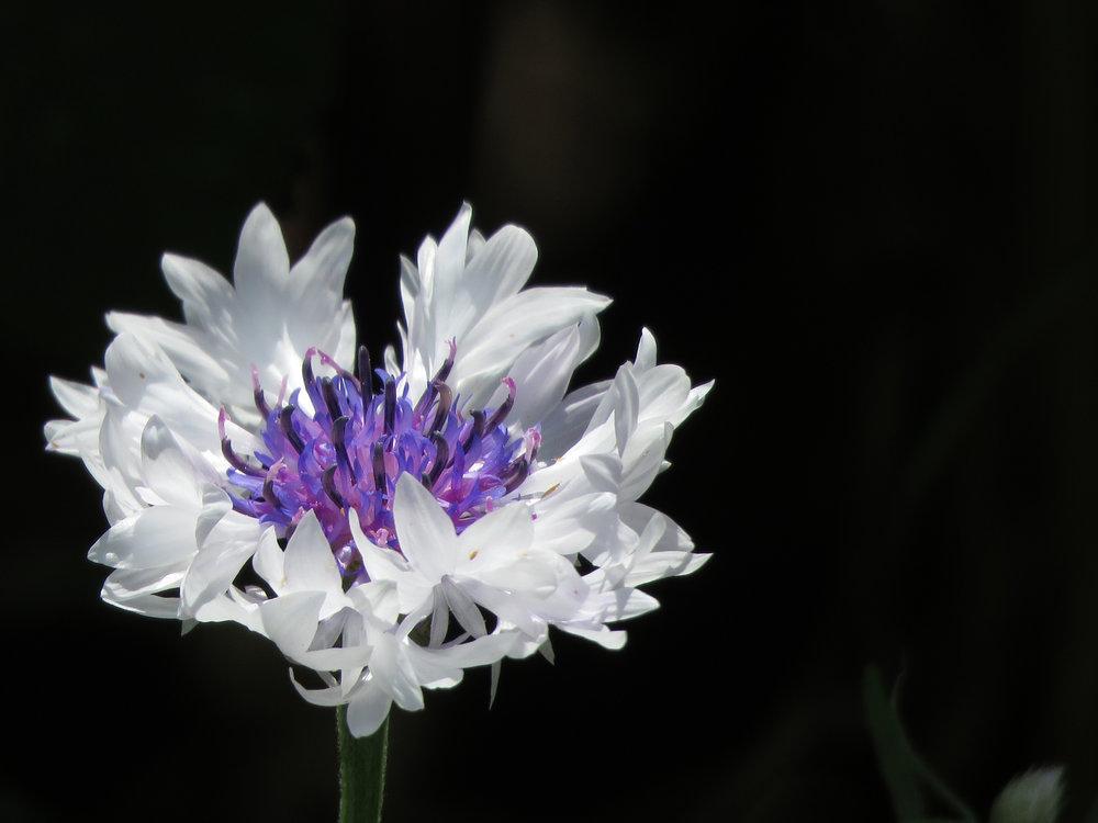 Floral 1500 7-12-2018 BBG CP 008P.jpg