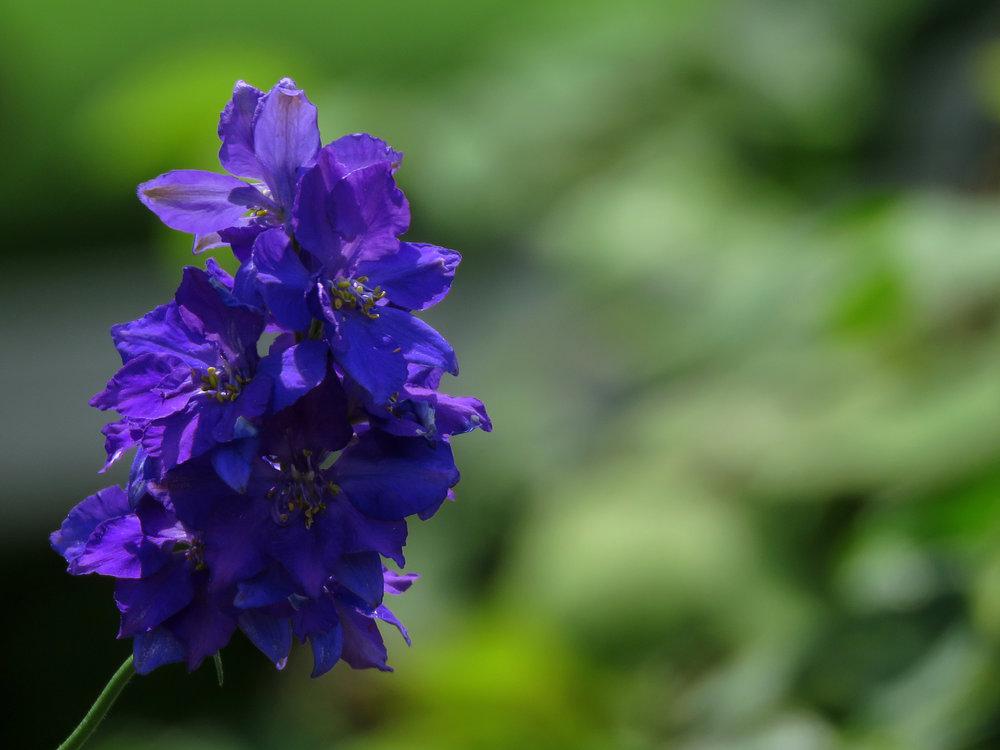 Floral 1500 7-12-2018 BBG CP 011P.jpg
