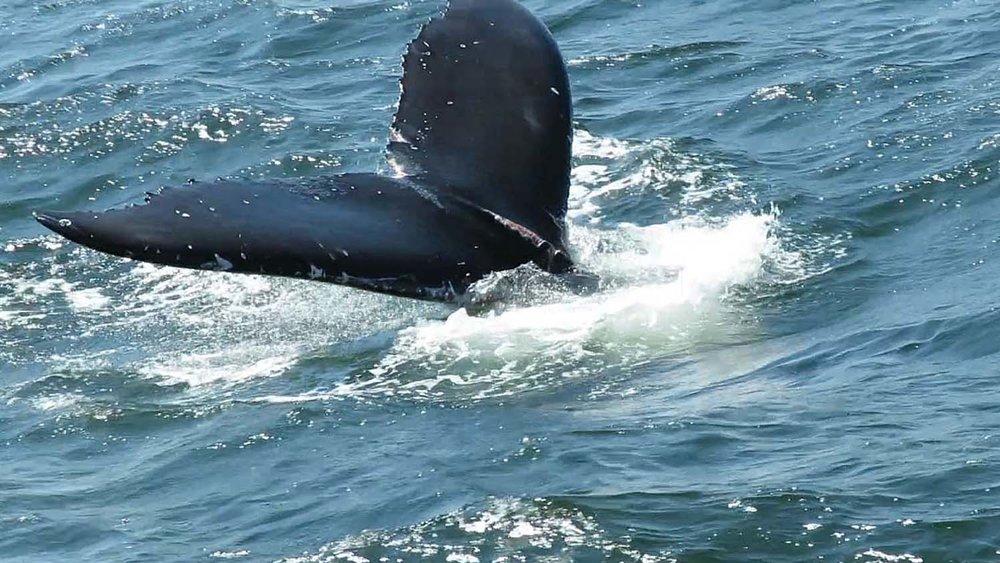 Whale 1500 8-23-2018 4.jpg