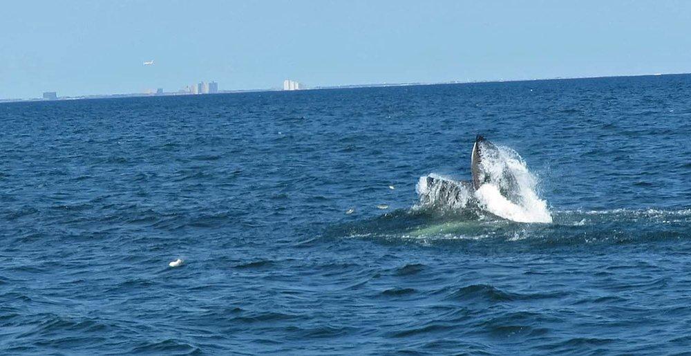 Whale 1500 8-23-2018 6.jpg