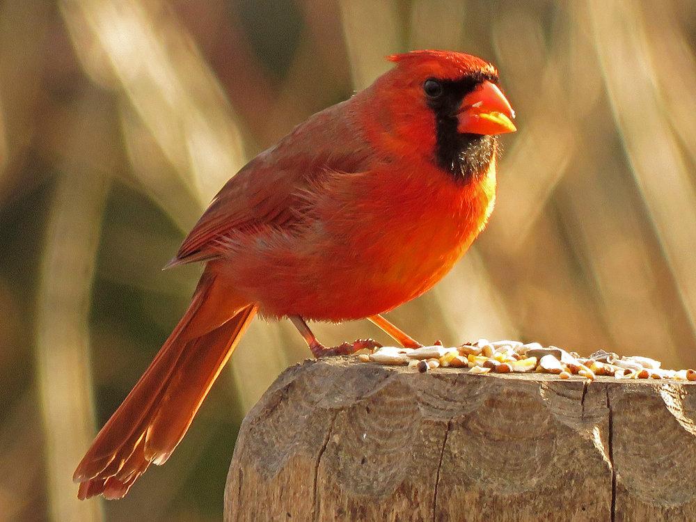 Cardinal 1500 3-31-2019 (9)P.jpg
