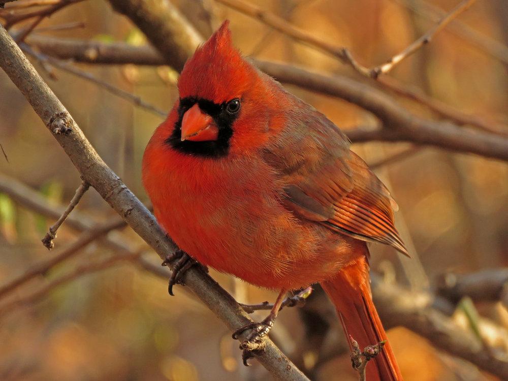 Cardinal 1500 3-31-2019 (20)P.jpg