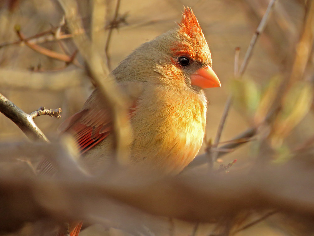 Cardinal 1500 3-31-2019 (22)P.jpg
