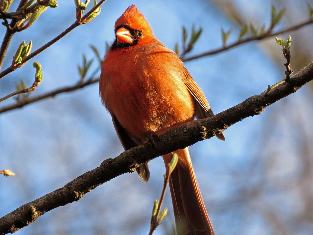 Cardinal 1500 3-31-2019 (41)P.jpg