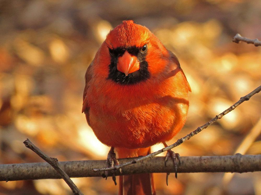 Cardinal 1500 3-31-2019 (25)P.jpg